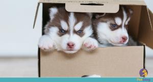 Adoção responsável: Dificuldade na adaptação pode resultar na devolução do pet