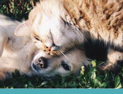 A insolação em pets