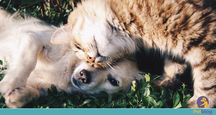 Insolação em pets: saiba porque ela ocorre