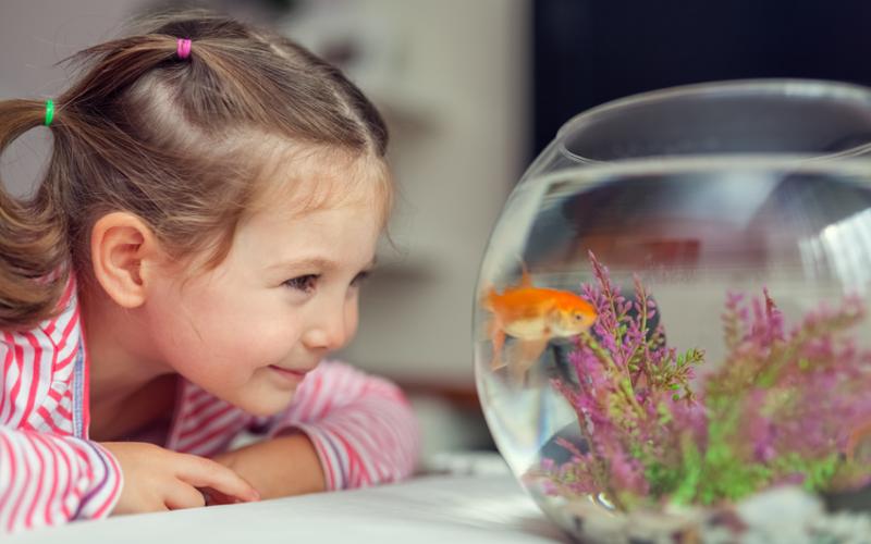 Tudo o que precisa saber para montar um aquário