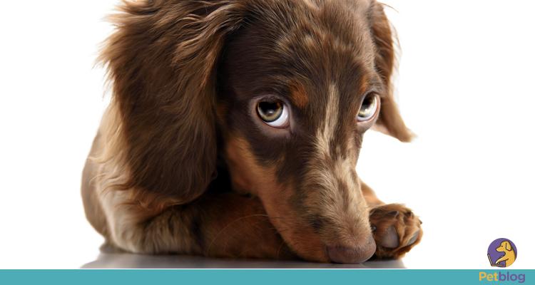 Os cães se assustam com trovões