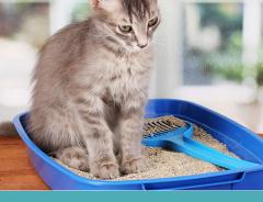 Como fazer o seu gato usar a caixa de areia?