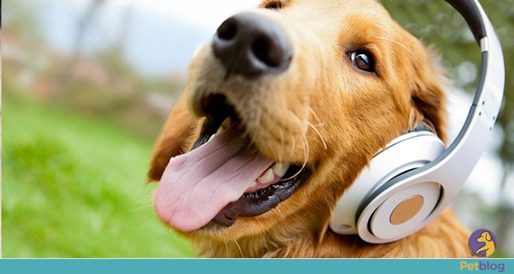 Terapias alternativas para pets: Quais podem ajudar?