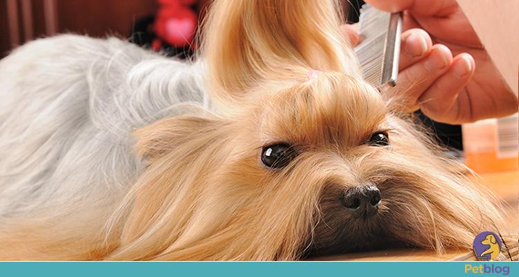 Quais os tipos de tosa para cachorros?