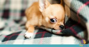Tratar gastrite em animais - Petblog