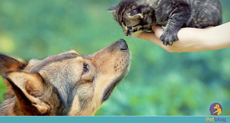 convivência entre cachorros e gatos