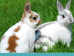 O que você precisa saber para criar um coelho!