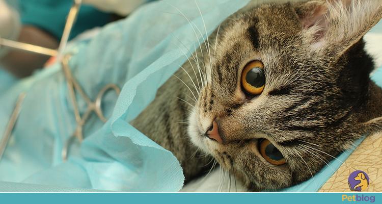 A importância da castração de gatos e cachorros