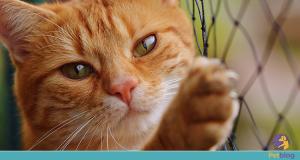 rede de proteção para gatos - petblog